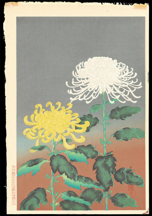 BakufuChrysanthemum(YellowandWhite)